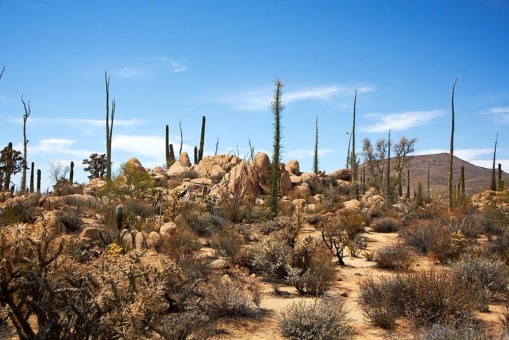 Arizona-2-008.jpg