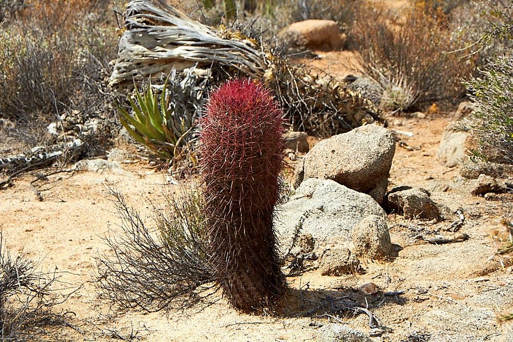 Arizona-2-013.jpg