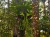 Fraser_Island-004.jpg