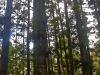 Fraser_Island-005.jpg