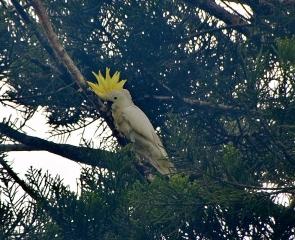 Queensland-036.jpg