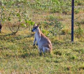 Queensland-095.jpg