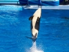 Sea-World-Florida-058