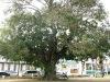 St.Kittes-Nevis-104