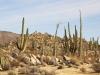 Mexico-Baja-California-1-018