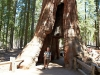Yosemite-242